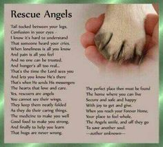 Dog rescue angels