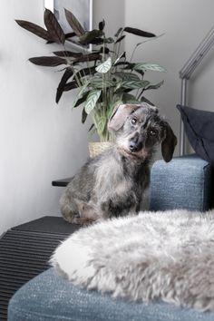 die besten 25 hunderampe ideen auf pinterest hund. Black Bedroom Furniture Sets. Home Design Ideas