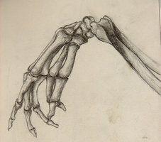 Skeleton Hand study by Deiphorm