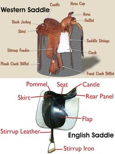The Parts of the Western Saddle and the English Saddle www.timetoride.com