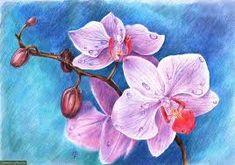 Картинки по запросу цветы нарисованные карандашом маркером
