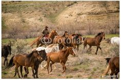 The wranglers drove over 500 horses 60 miles in two days from their winter range to the Sombrero Ranch. Photo is available at https://us.fotolia.com/id/109834071     by © Georgia Evans