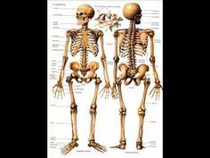 Cançó l'esquelet.wmv Lets Dance, Science, Statue, Videos, Youtube, Halloween, Natural, Kids Songs, Human Body