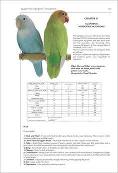 Parakeets, Parrots, African Lovebirds, Cute Birds, Bird Feathers, Wildlife, Animals, Book, Amor