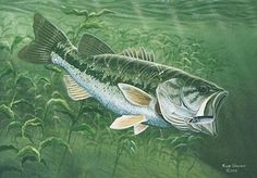 i could fish alll day as long as they r biting   Google Image Result for http://www.learninghowtofish.com/media/FishID/largemouthbass.jpg