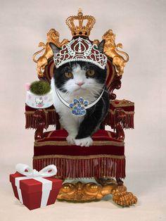 King Pokey #GrumpyCat #FanArt Grumpy Cat™ stuff, gifts, coupons, quotes, meme on www.pinterest.com/erikakaisersot