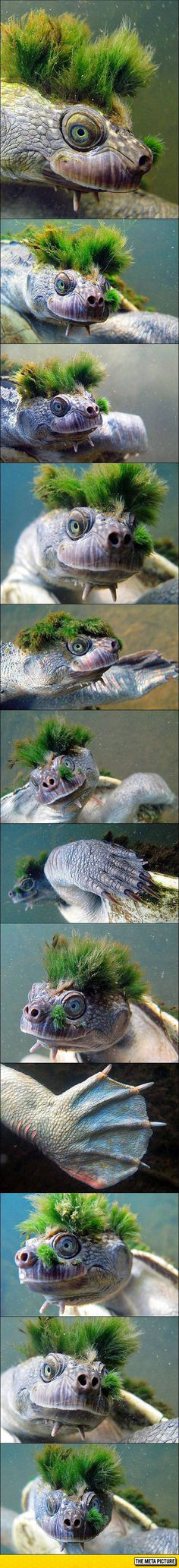 Moss Turtle, And You Thought You Had A Bad Hair Day