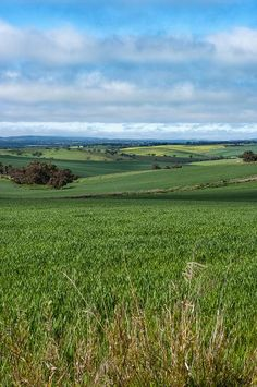 Adelaide Hills, Australia (Mark Penworthy photo).The Adelaide Hills are part of the Mount Lofty Ranges, east of the city of Adelaide in the state of South Australia.  It has a world-famous reputation as a wine producing region.
