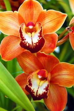 Orchid [ PrevatteFlorist.com ] #orchid #flowers #occasion