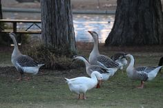 Waterfowl at Roeding Park, a sight many remember from Fresno Growing Up. https://www.amazon.com/Fresno-Growing-Up-Comes-1945-1985/dp/1610352505/ref=asap_bc?ie=UTF8