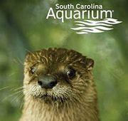 We love aquariums! This one has a Sea Turtle Hospital