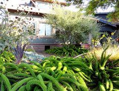 @dangergarden: The garden of snakes…