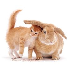 Cute Little Kittens Playfully Pose Alongside Their Adorably Matching Bunny Counterparts