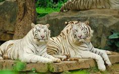 سيف للسفر و السياحة - الفعاليات التى توفرها لك حديقة الحيوانات في شنغماي