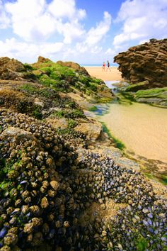 Cornwall - lots of mussel-covered rocks! One of the best bits about going to Cornish beaches is being able to explore all the rockpools and marine creatures which live on the rocks, and you get to see them at low tide.
