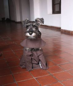 In Catholic tradition, St. Francis of Assisi is the patron saint of animals — so perhaps it's only fitting that one of the newest followers to join his order is quite literally a dog.