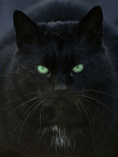 """Black Cat""  by Tobiasz Stefaniak"