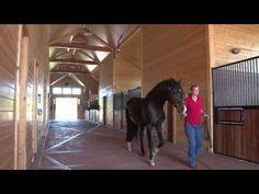 Wild Turkey Farm, LLC | Stallion Barn
