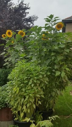Shade Perennials, Garten, Summer Recipes