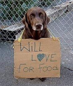 homeless dog plea