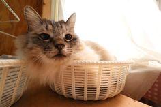 ばー - かご猫 Blog