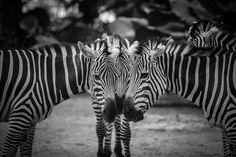 Original Animal Photography by Christian Laurent Animal Photography, Amazing Photography, Travel Photography, Make Photo, Photo Art, Wild Nature, Animal Fashion, National Geographic Photos, Medium Art