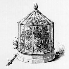 The Victorian public became fascinated with natural history. Women in particular preserved, studied and displayed.   Along with collecting ferns, women also bred and cultivated them.  Some were dried, pressed, and framed.  Others were displayed in Wardian cases, which were airtight, enclosed glass cases.  More elaborate showcases included miniature gardens and aquariums.