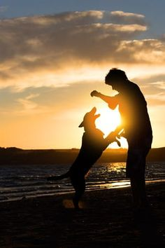 #man #boy #dog #beach You can download this photo from https://www.shutterstock.com/ru/image-photo/young-man-his-dog-nature-back-640174204?src=Gxp-XVk3NXbW7ahabpcT-w-1-4 https://fotolia.com/id/149209720 http://www.istockphoto.com/%D1%84%D0%BE%D1%82%D0%BE/young-man-with-his-dog-in-nature-gm696206046-128797801