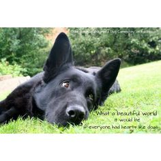 Wicked Training Your German Shepherd Dog Ideas. Mind Blowing Training Your German Shepherd Dog Ideas. Black German Shepherd Dog, German Shepherd Puppies, German Shepherds, Schaefer, Dog Activities, Dog Memes, Working Dogs, Happy Dogs, Dog Life