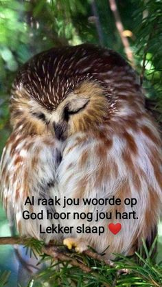 Goeie Nag, Goeie More, Special Quotes, Prayer Quotes, Afrikaans, Good Night, Qoutes, Animals, Image