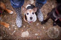 dogs » scruffy dog photography