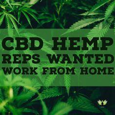 Click here for more info: www.cbdhealthbiz.com
