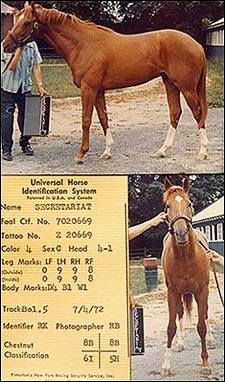 Secretariat's 2 year old identification photos