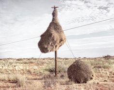 Massive Bird Nests Built on Telephone Poles in Southern Africa are Home to Multiple Species of Birds