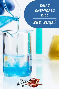 What Chemicals Kill Bed Bugs Kill Bed Bugs Bed Bugs Bed Bug Bites Treatment