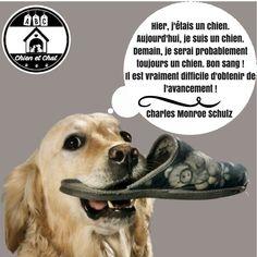 Les 210 Meilleures Images De Citations Humour Abc Chien
