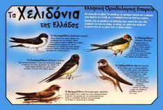 """Χελιδόνα έρχεται απ τη μαύρη θάλασσα…"""" - Поиск в Google Canary Birds, Spring Crafts For Kids, Kids And Parenting, Animals, Google, Kids, Animales, Animaux, Animal"""