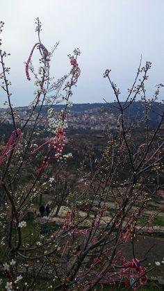 Veliko Tarnovo spring