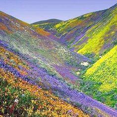 Carizzo Plain National Monument