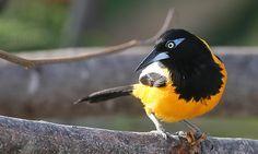 Bijzondere vogels spotten op Curaçao   Curaçao