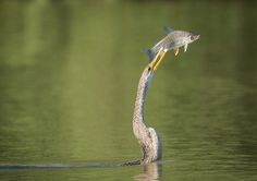 22 Best Wildlife Photos From National Geographic Traveler Photo Contest Cute Animal Pictures, Cool Pictures, Cool Photos, Funny Pictures, National Geographic, Funny Animals, Cute Animals, Animals Beautiful, Perfectly Timed Photos