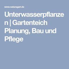 Attraktiv Unterwasserpflanzen | Gartenteich Planung, Bau Und Pflege