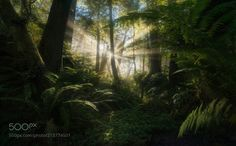 Under the Ferns by MAPhoto #Landscapes #Landscapephotography #Nature #Travel #photography #pictureoftheday #photooftheday #photooftheweek #trending #trendingnow #picoftheday #picoftheweek