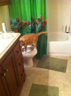 Now how do i flush
