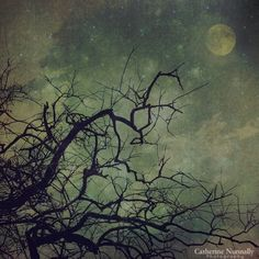 Really love this photo...the colors, the moon, the tree limb against the background creating textures and what seems like opposing forces...