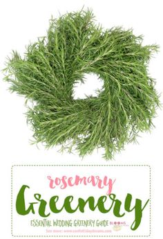 Rosemary greenery an