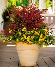 371 best mixed containers images on pinterest container flowers nandina yellow lantana mightylinksfo