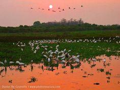 Pantanal, Mato Grosso/Mato Grosso do Sul, Brazil.