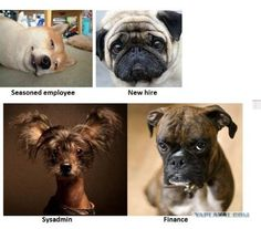 Pictures, jokes, and other stuff: Funny dog pictures - If Dogs Worked in Offices