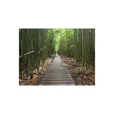 Boardwalk Trail Through a Bamboo Forest on Maui, Hawaii, USA... ($24) ❤ liked on Polyvore featuring home, home decor, wall art, backgrounds, filler, photography wall art, photography posters, wall-cover, forest home decor and bamboo home decor